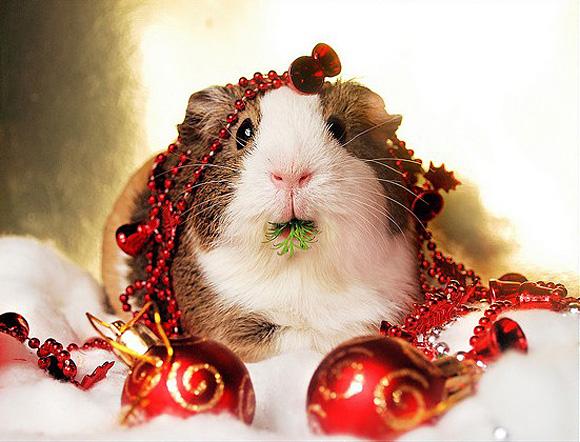 Christmas Cute